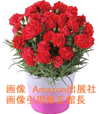 母の日カーネーション 感謝の気持ち 鉢植え フラワーギフト 13号鉢 (赤)